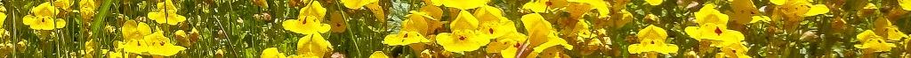 spring flower divider